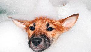 Dog Wash Hydro Surge Bath